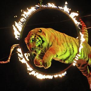 Цирки Шатуры