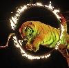 Цирки в Шатуре