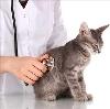Ветеринарные клиники в Шатуре
